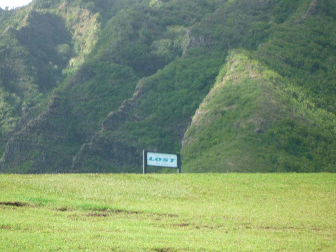 クアロア牧場の芝生