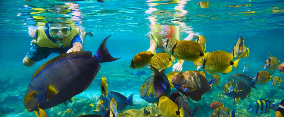aulani-rainbow-reef-detail-fish-kids-hero