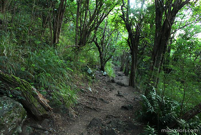 クリオウオウの林