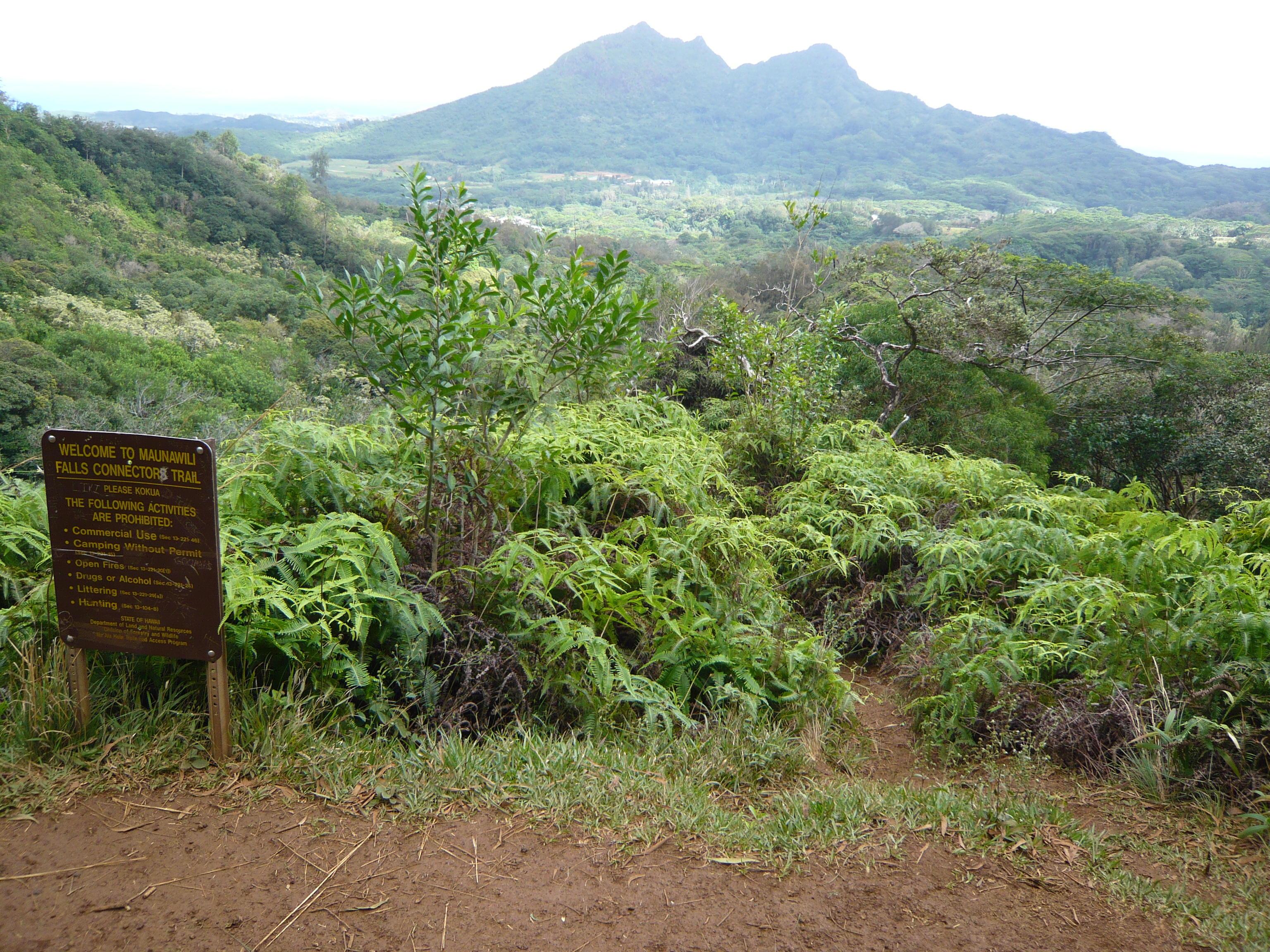 緑に埋もれる登山