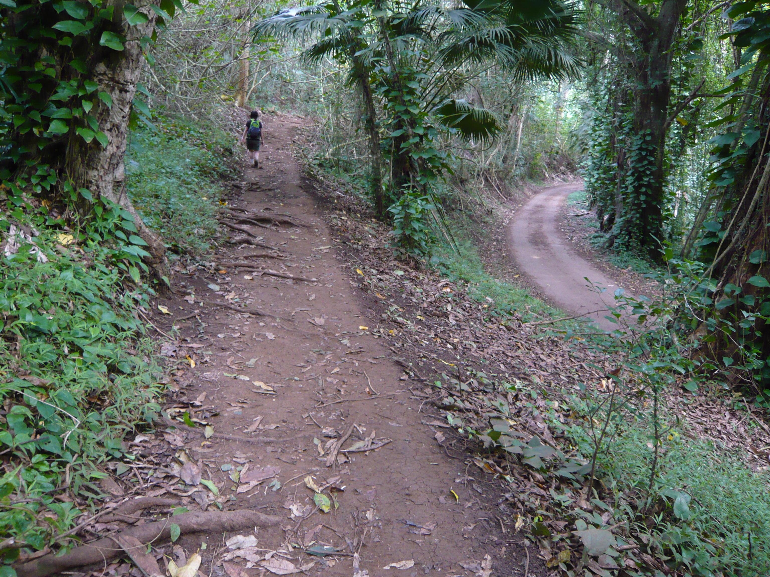 マウナウィリ登山道