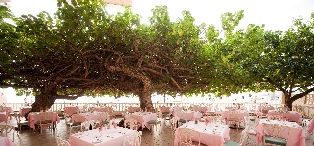 ハウツリーラナイの木
