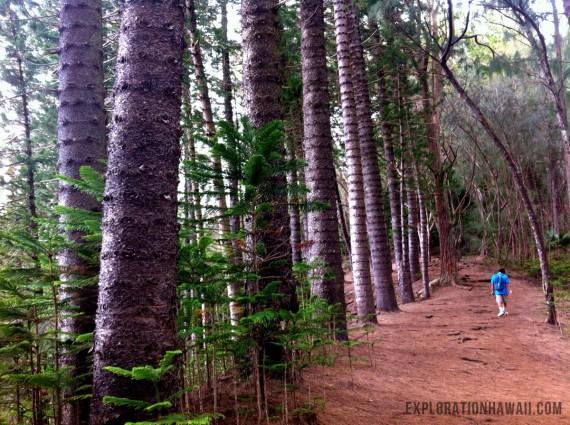 クリオウオウの登山道