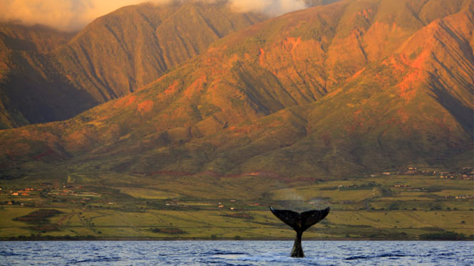 何故クジラが