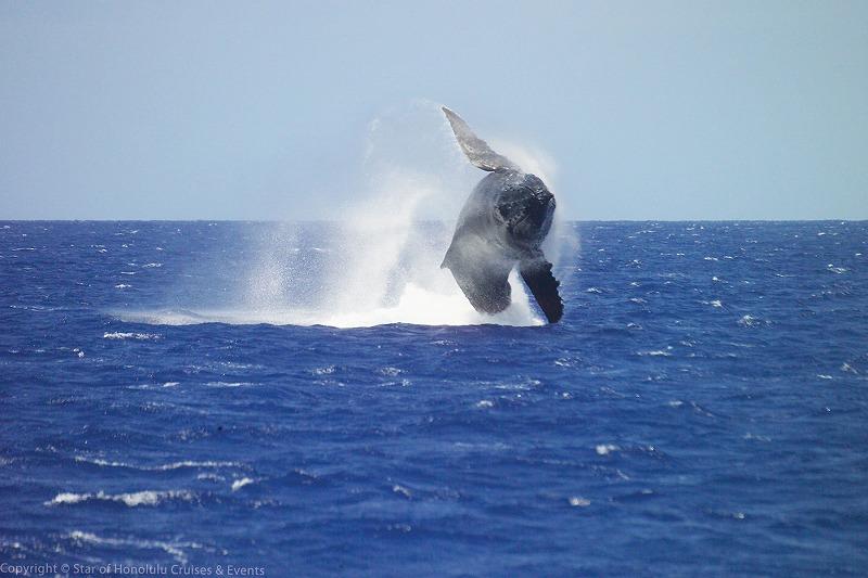 クジラが飛ぶ
