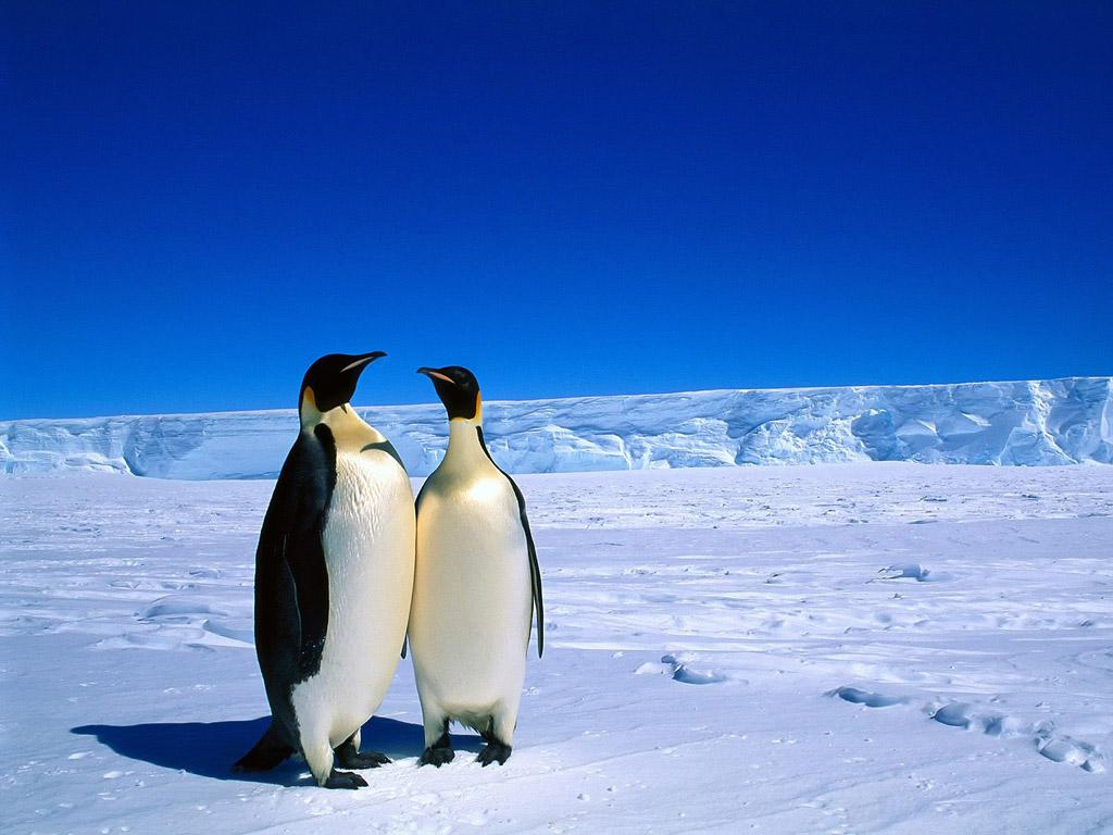 「南極」の画像検索結果