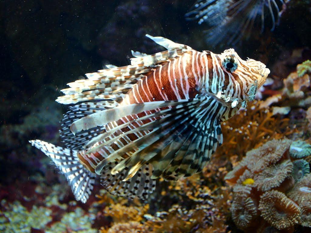 ニューカレドニア水族館