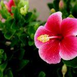 アロハテイストの可愛いお土産が欲しい!!ハワイで雑貨買うならコレSP