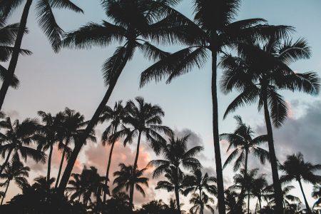ハワイと日本の平均気温