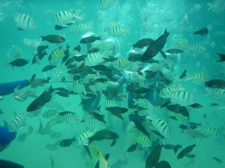 海の中の魚
