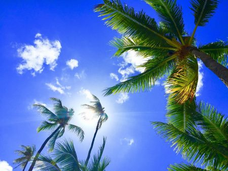 ハワイ パイレーツオブカリビアン ココ
