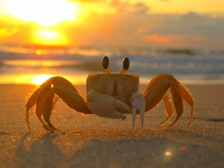 siri-beach-crab-mar-sand-sol