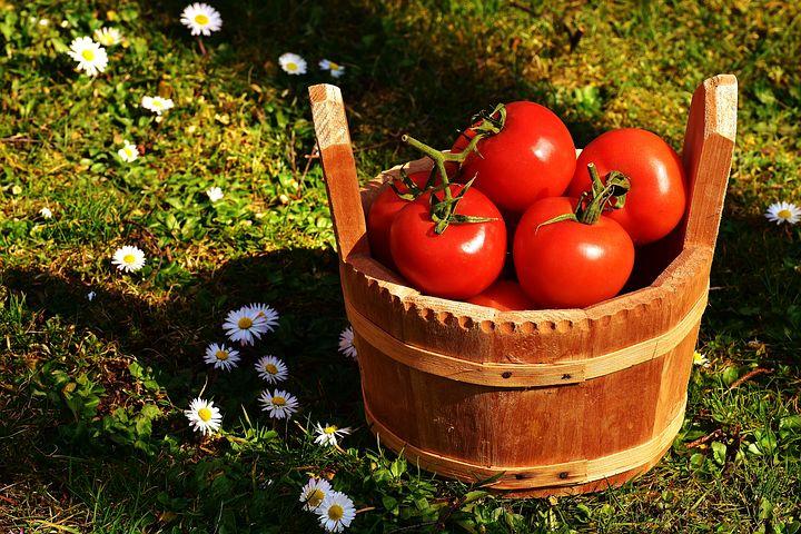 tomatoes-2176846__480
