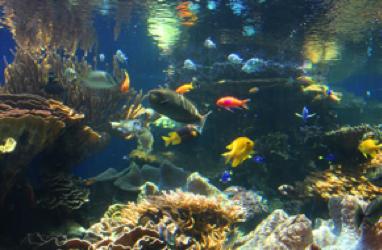 ハワイ ワイキキ水族館 特徴