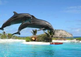 ハワイ ワイキキ水族館 イルカ