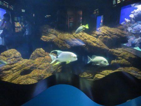 ハワイ ワイキキ水族館