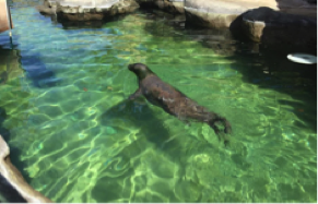 ハワイ ワイキキ水族館 アクティビティ