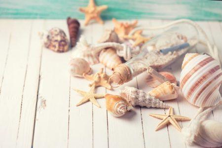 ハワイ ジュエリー 貝殻