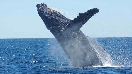 ハワイ ジュエリー クジラ