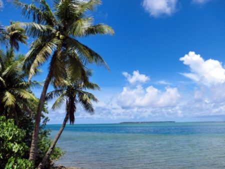 ハワイ ジュエリー ヤシの木
