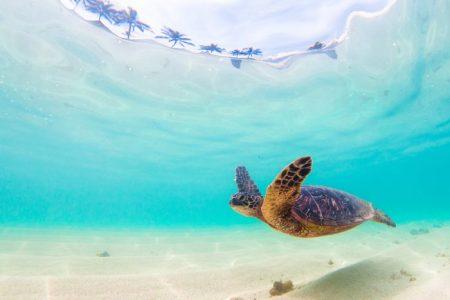 ハワイ おすすめビーチ