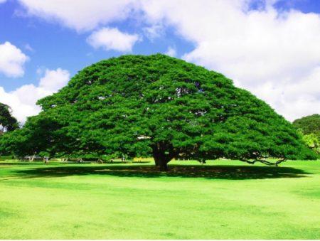 ハワイ インスタスポット モアナルナガーデン