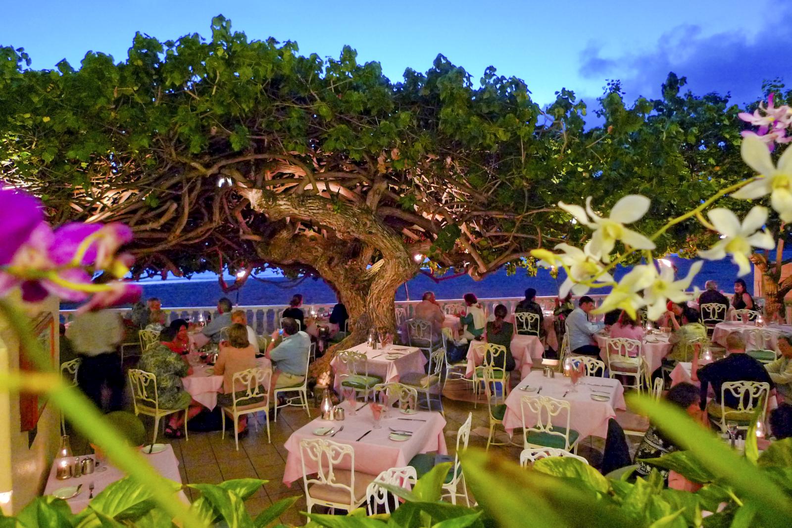 ハウツリーラナイ(Hau Tree Lanai)