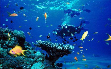 バリ島 ダイビング ポイント