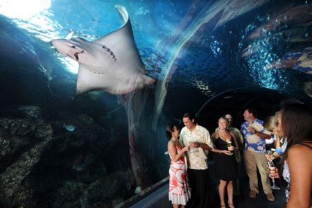 ハワイ マウイオーシャンセンター トンネル水族館