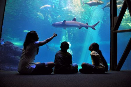 ハワイ マウイオーシャンセンター 夜の水族館