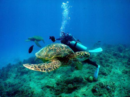 ハワイ スキューバダイビング ウミガメ