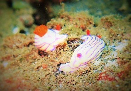 バリ島 ダイビング アメット