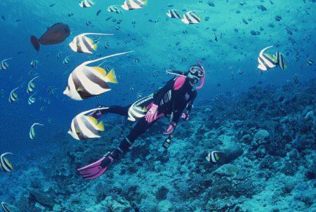 バリ島 ダイビング シーズン