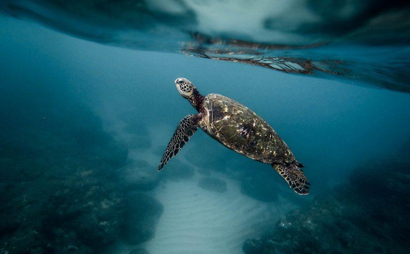 ハワイ スキューバダイビング ダイビングスポット
