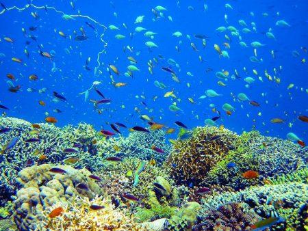 セブ島 ダイビング カビラオ島