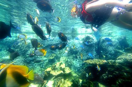 グアム プール 泳げる水族館