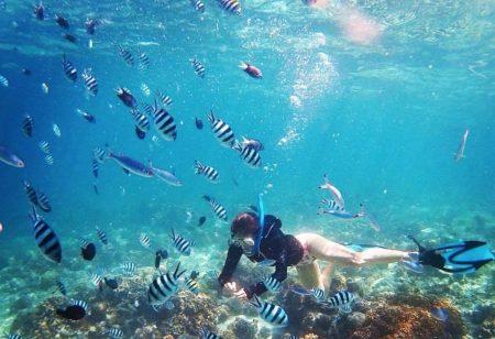 セブ島 ダイビング ヒルトゥガン島
