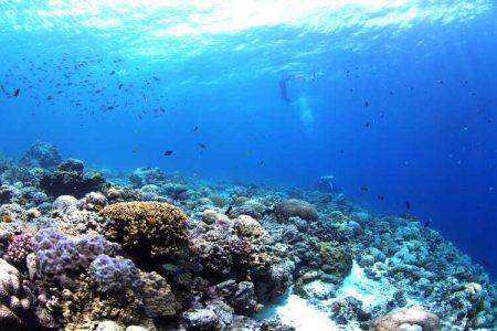 セブ島 ダイビング ナルスアン島