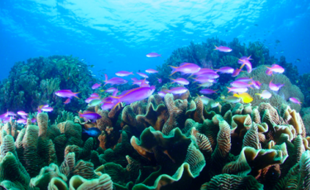 セブ島 ダイビング スミロン島