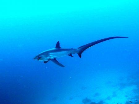 セブ島 ダイビング マラパスクア島