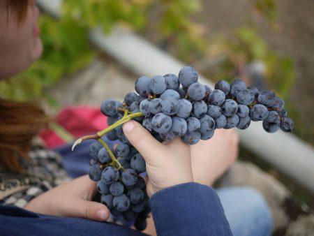 シチリア ワイン エトナ山周辺
