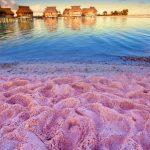 バハマの「ピンクサンドビーチ」が魅力的!キュートなピンクでSNS映えを狙うべし!