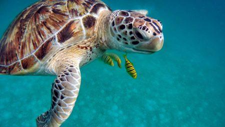 セブ島 旅費 ダイビング