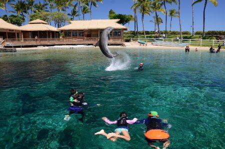 ハワイ ヒルトンワイコロア ドルフィン