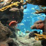 シドニー観光ならこの水族館へ!シー・ライフ・シドニーアクアリウム