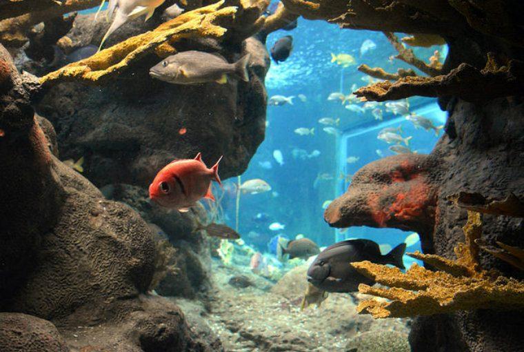 シドニー 水族館 観光